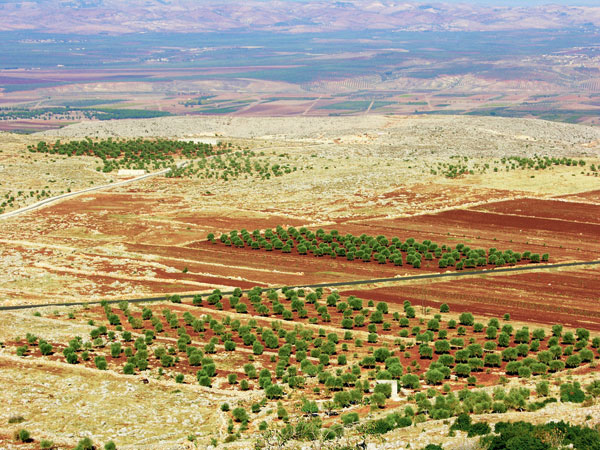 Plantations-Syrie